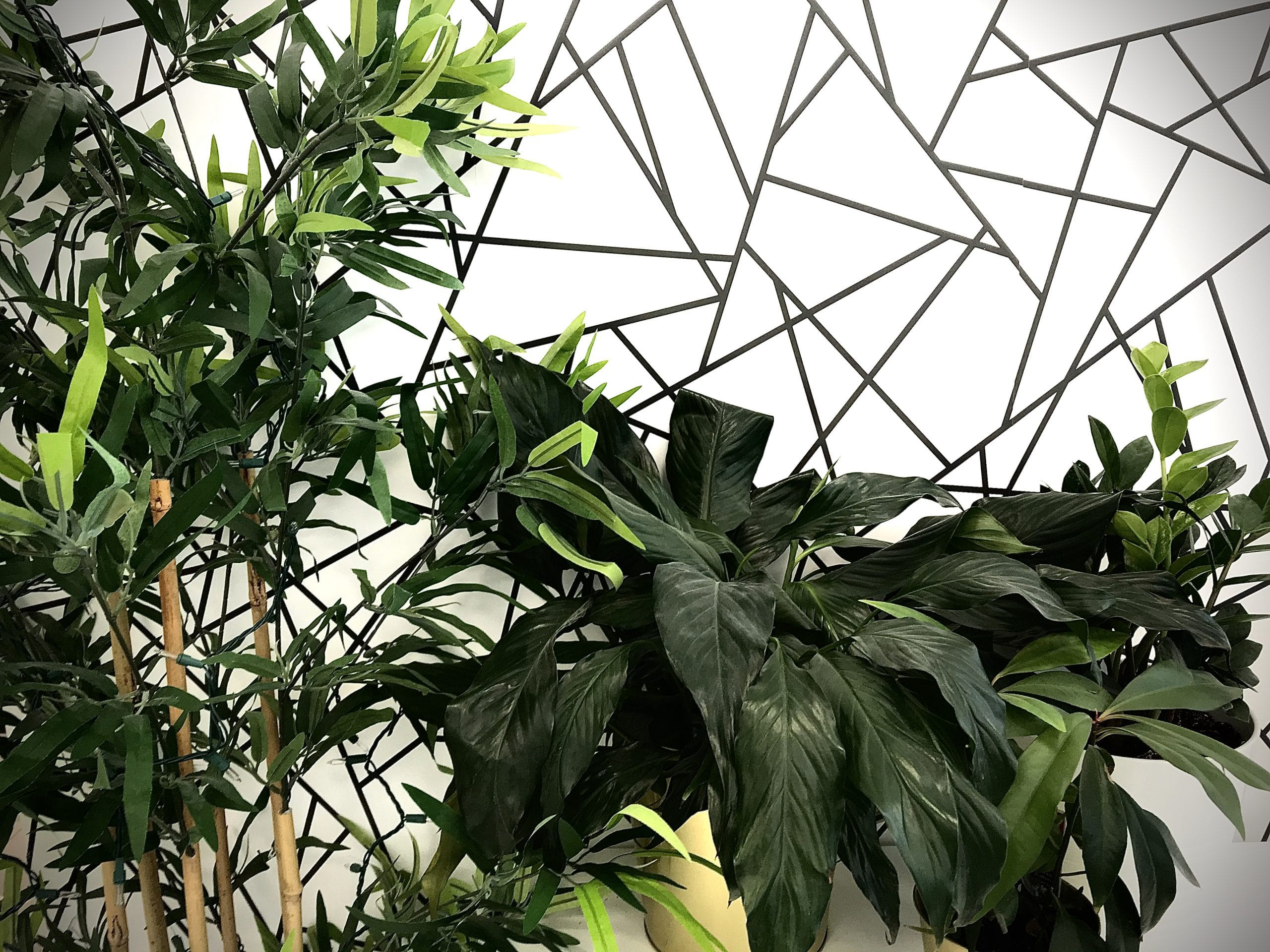 Plants in front of wall with black line wall papers.